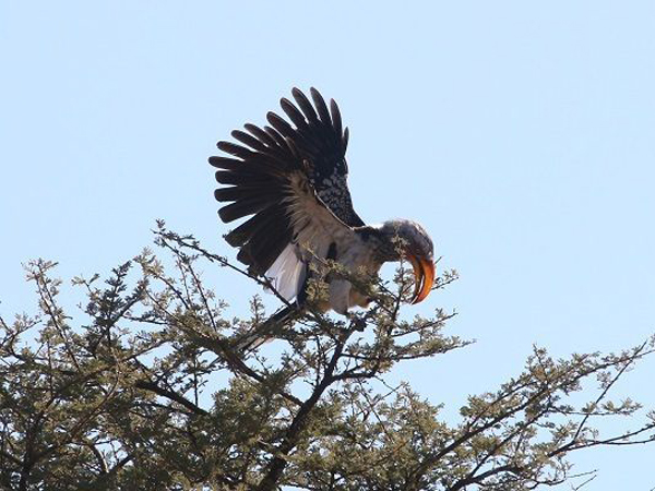 hunting-namibia-019