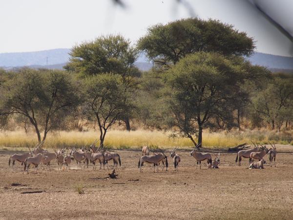 hunting-namibia-074