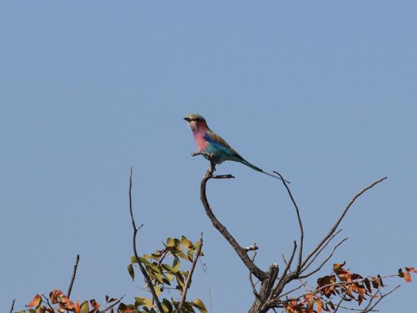hunting-namibia-056