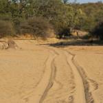 hunting-namibia-062 2