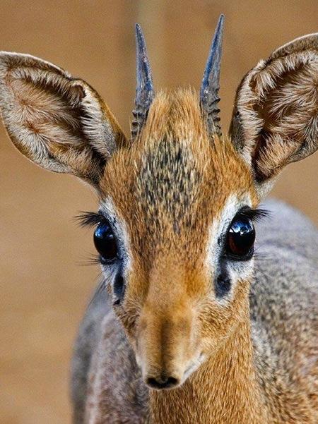 hunting-namibia-072