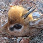 hunting-namibia-086