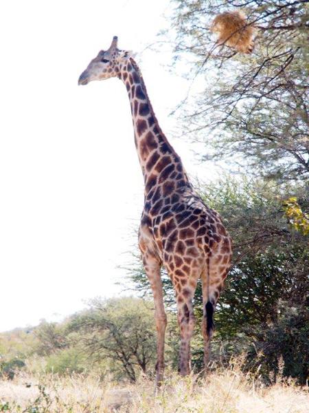 hunting-namibia-025