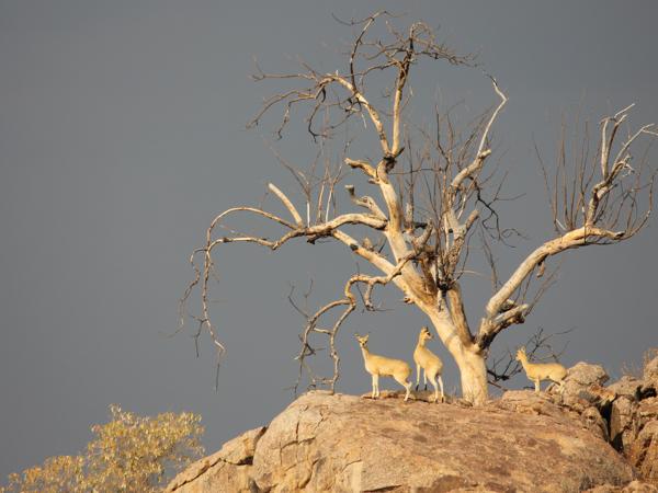 hunting-namibia-063