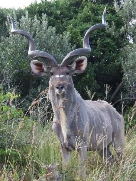 hunting-namibia-073
